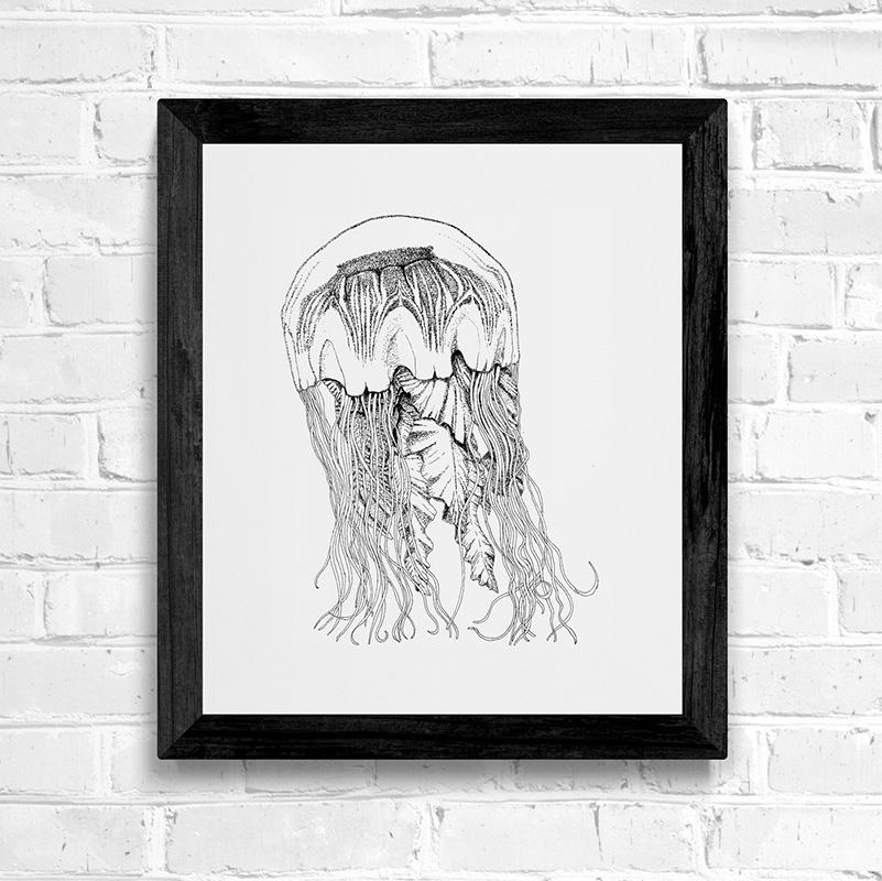 Lions mane jellyfish fine art print