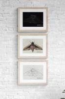 Moths Fine Art Prints Set
