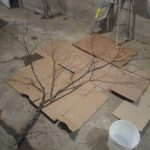 Branch for an Easter tree
