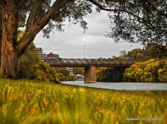 paramatta river in sydney