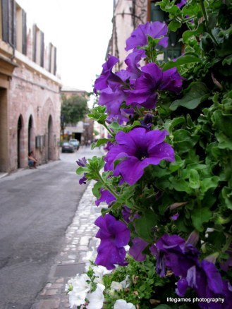 pictures-of-ITALY (101)