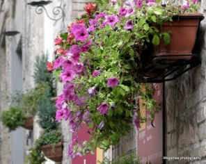 pictures-of-ITALY (61)