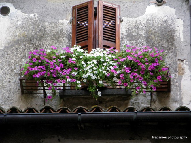pictures-of-ITALY (86)