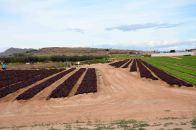 Paisajes de agricultura intensiva, incluidos en el recorrido