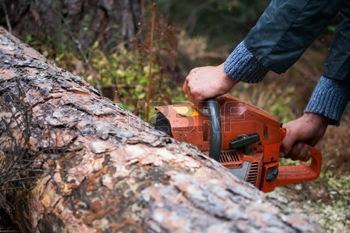 すぐに薪割りできない原木、玉切りの保管で【これだけはしておこう】という3つのコト