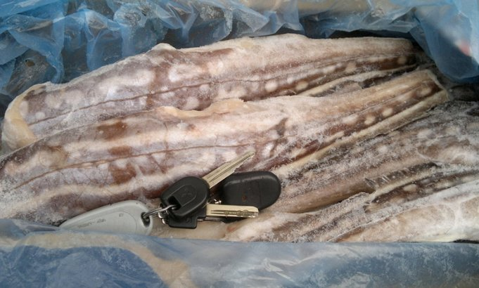 Рыба заяц химера