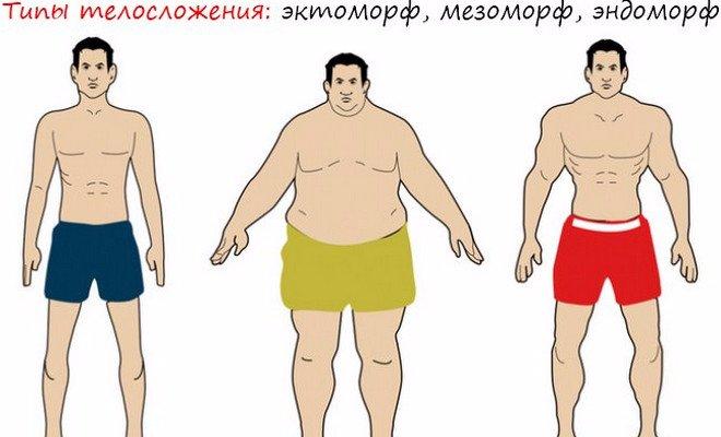Строение тела эктоморф мезоморф эндоморф