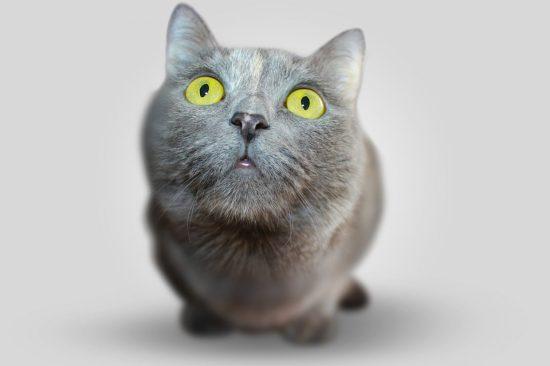 Кот, кошка, внимание