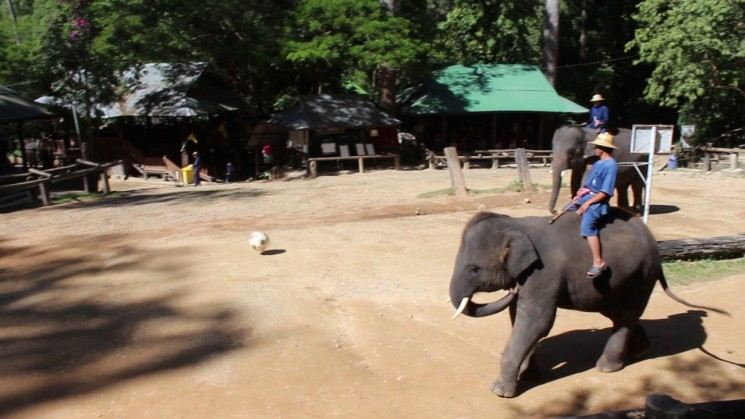 фишки дня - 13 марта, День слона в Таиланде