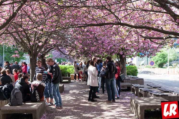 фишки дня - 27 февраля, Праздник цветения сакуры, праздники в Японии