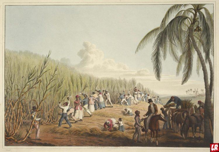 Сахарная плантация, Карибы, остров Антигуа