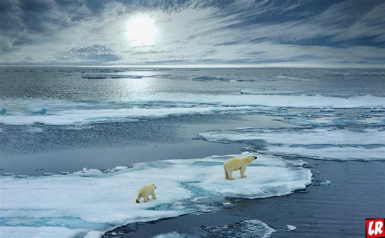 полярные медведи, лед, архипелаг, Арктика, Свальюард, Куда поехать в июле