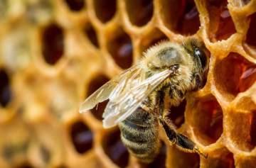 фишки дня, день пчелы