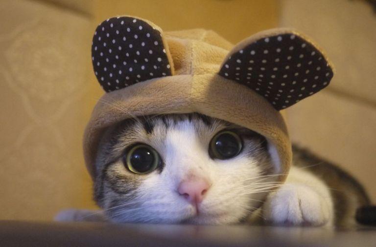кот, мир кота