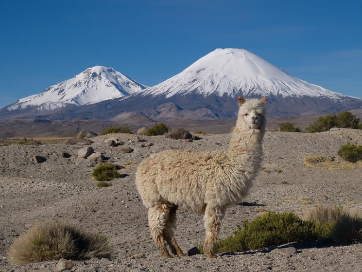 Чили, киберпреступники в туризме