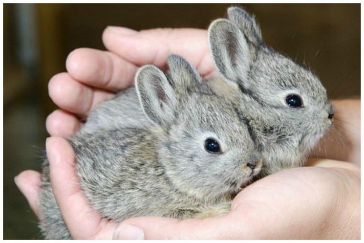 фишки дня - 27 сентября, День кролика, кролик-пигмей