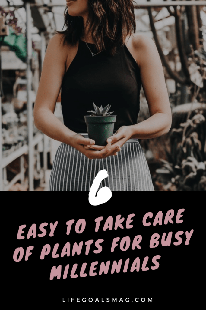 best plants for millennials – easy to care for, low-maintenance plants