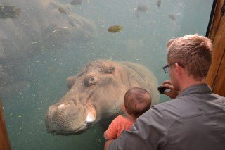 The only animal that Wiley was scared of were the Hippos