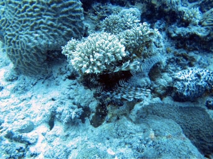 rafa koralowa na Malediwach, wybielona martwa rafa koralowa