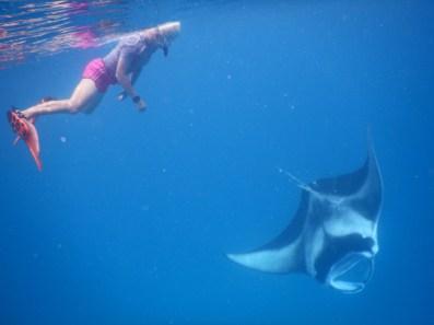 pływanie z mantami na Malediwach, nurek pływa z mantami