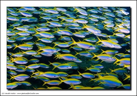 Andamans-Dec08-0042