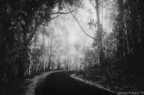 madeira island dark road