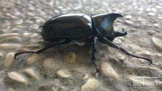 Bug in Sumatra island