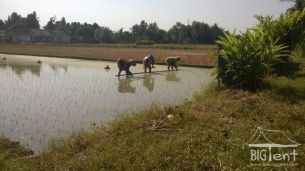 Interesting facts about Indonesia - rice field