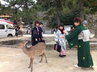 Deer and Japanese women on Miyajima Island, Japan