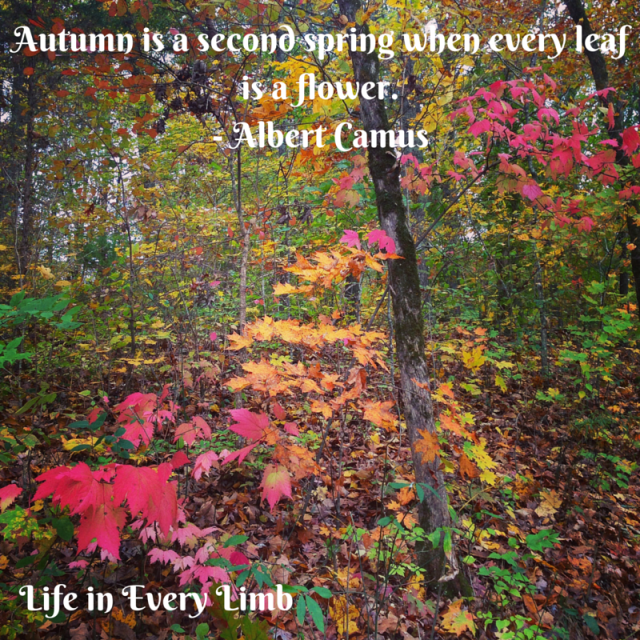 Autumn is a second spring when every leaf is a flower.- Albert Camus