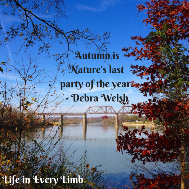 Autumn is Nature's last party of the year.- Deborah Walsh
