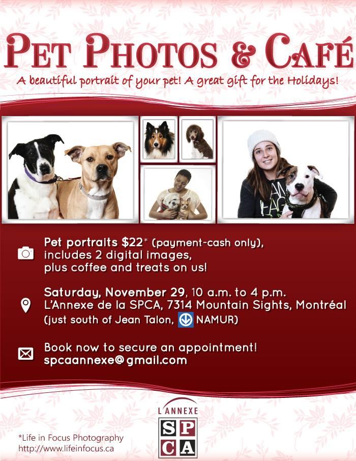 Montreal Pet Photographer Lifeinfocusca