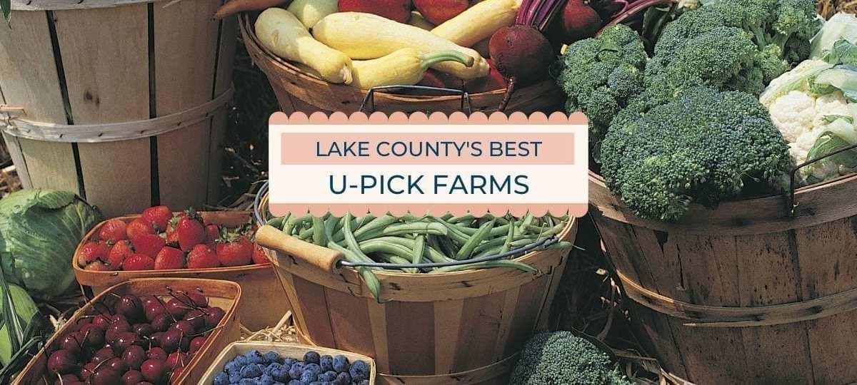 Mount Dora U-Pick Farms