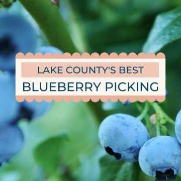 Blueberry Picking in Mount Dora