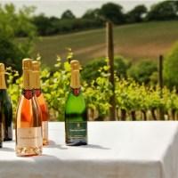 Winechap English wine and truffle tour