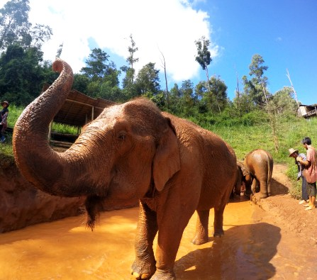 Amazing Mud Bath, The Karen Elephant Experience at Elephant Nature Park, Chiang Mai