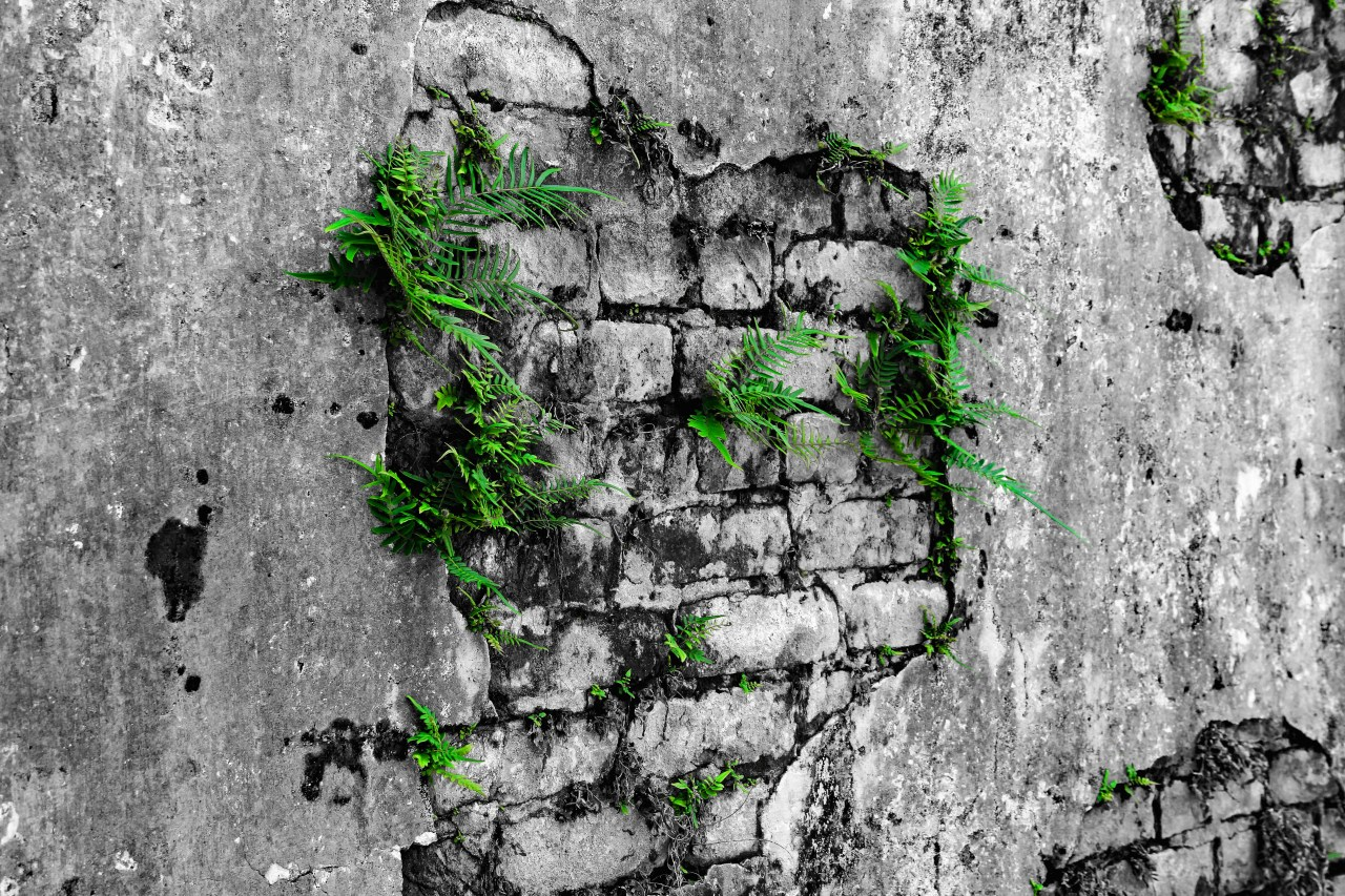 Bricks in the wall green highlight