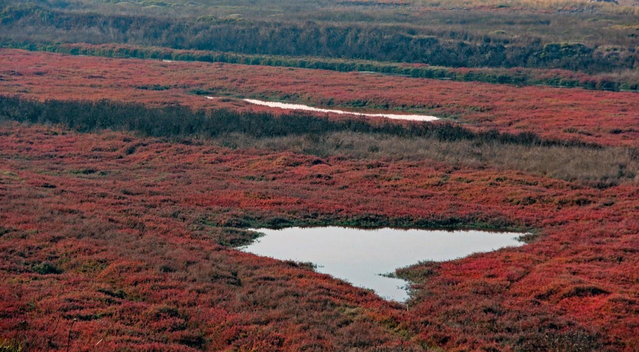 Pescadero Marsh 2