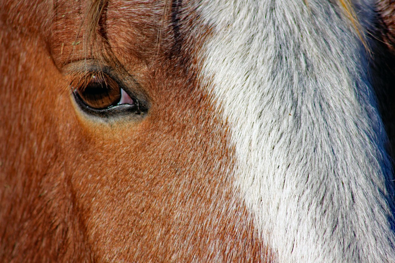 Eye of the mustang