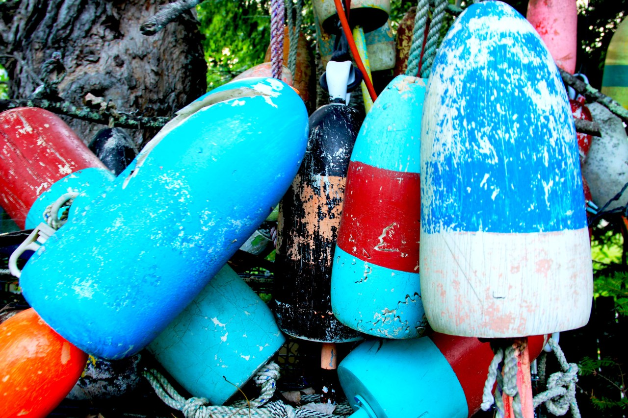Bouys in tree close up