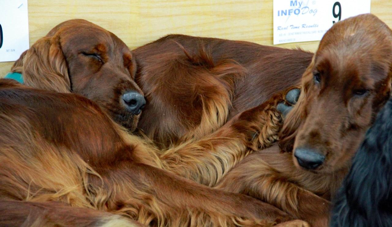 Sleeping setters
