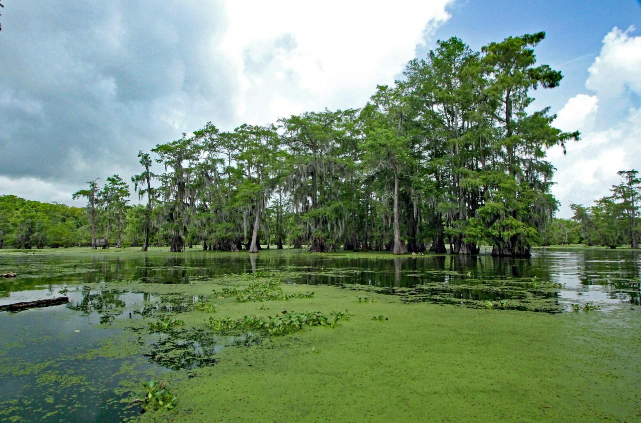 Swamp panorama edited