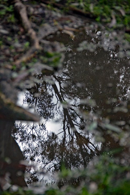 Tree reflection color