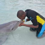 A Day With The Dolphins 1