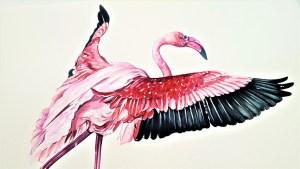 The Greater Flamingo Art Bird Painting Animal