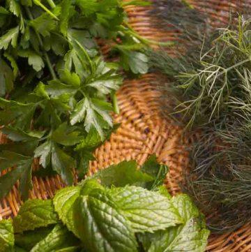 three herbs for recipes