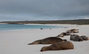 Gardner Bay-seals on beach