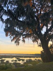 moss-covered oak trees overlook marshland