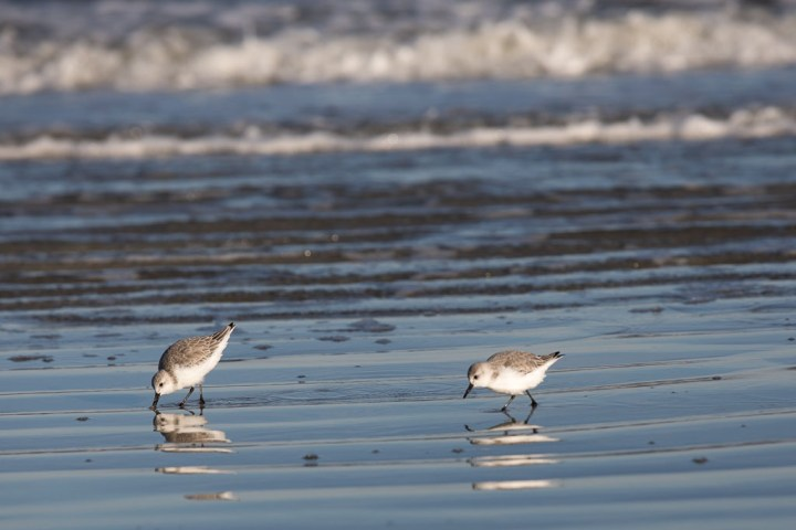 Cumberland-birds