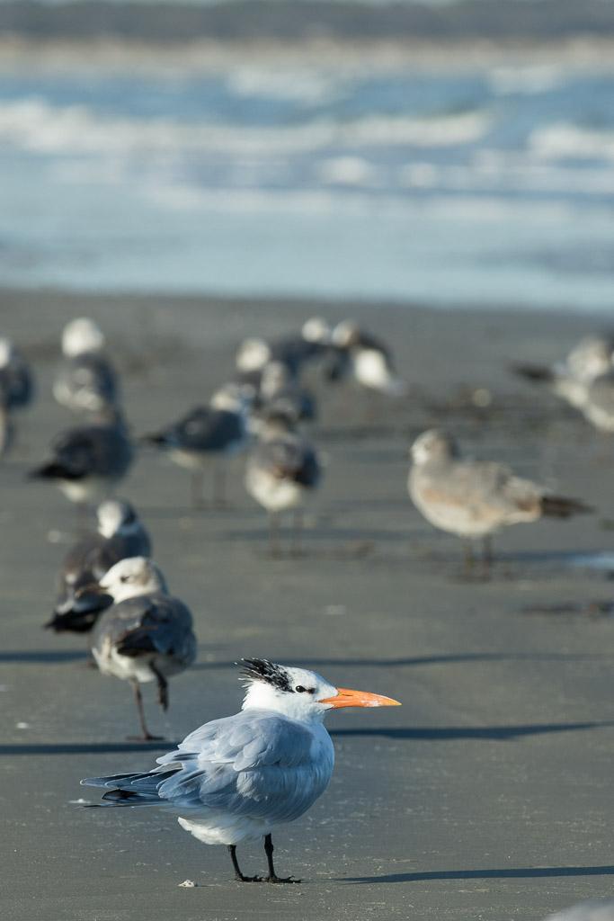 Cumberland-seagulls